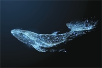 What Does Talking to Whales Tell Us about Machine Translation?